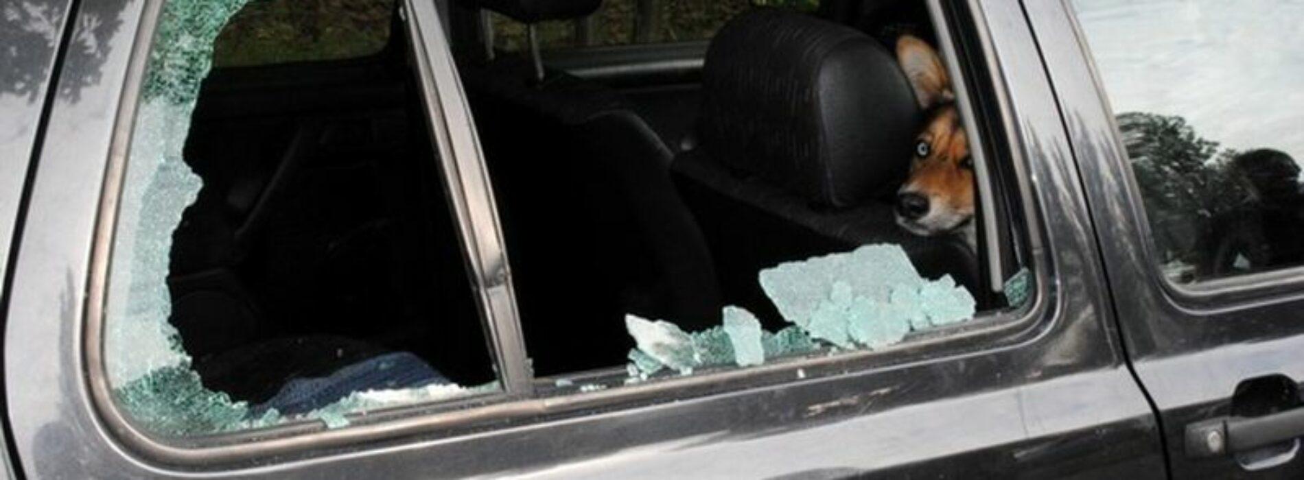 Dzięki ludzkiej czujności, policjanci uratowali psa zamkniętego w samochodzie